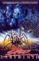 Spider Labyrinth