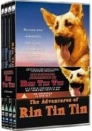 The Adventures of Rin Tin Tin                                  (1954-1959)