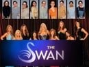 The Swan                                  (2004-2005)