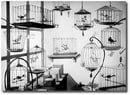 The Bird Store