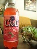C&C Watermelon
