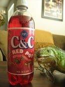 C&C Red Pop