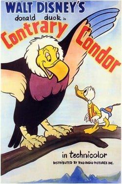 Contrary Condor